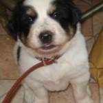 Meet Doogle!