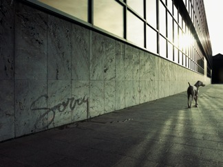 Dog Says Sorry